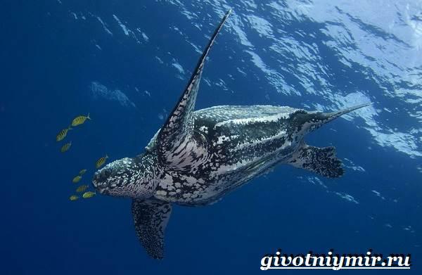 Кожистая-черепаха-образ-жизни-и-среда-обитания-кожистой-черепахи-2