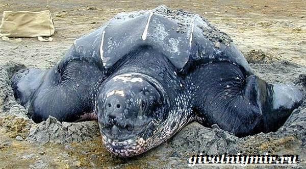 пасть кожистой черепахи фото