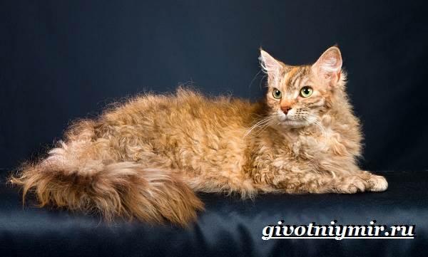 Лаперм-кошка-Описание-особенности-уход-и-цена-кошки-лаперм-4