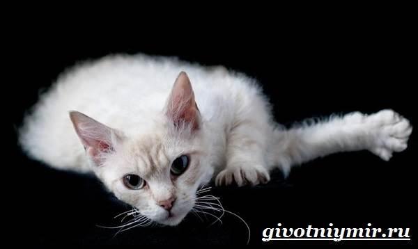 Лаперм-кошка-Описание-особенности-уход-и-цена-кошки-лаперм-5