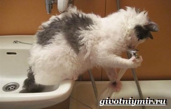 Лаперм-кошка-Описание-особенности-уход-и-цена-кошки-лаперм-6