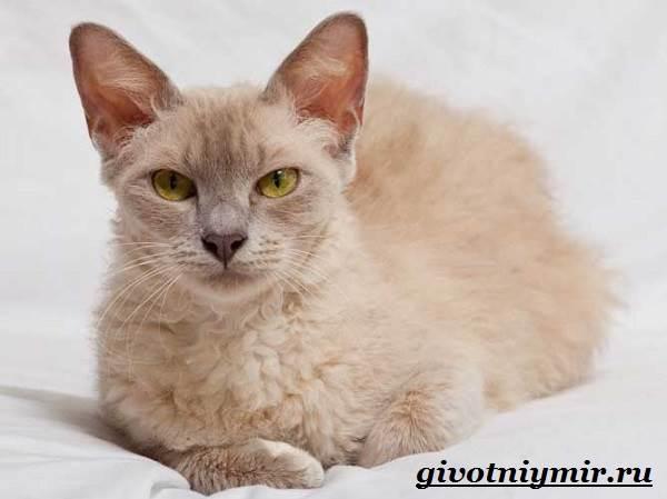 Лаперм-кошка-Описание-особенности-уход-и-цена-кошки-лаперм-8