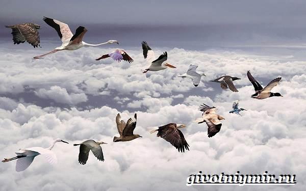 Почему-птицы-улетают-на-юг-1
