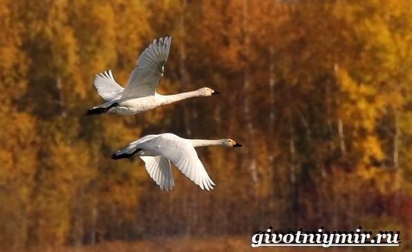 Почему-птицы-улетают-на-юг-2