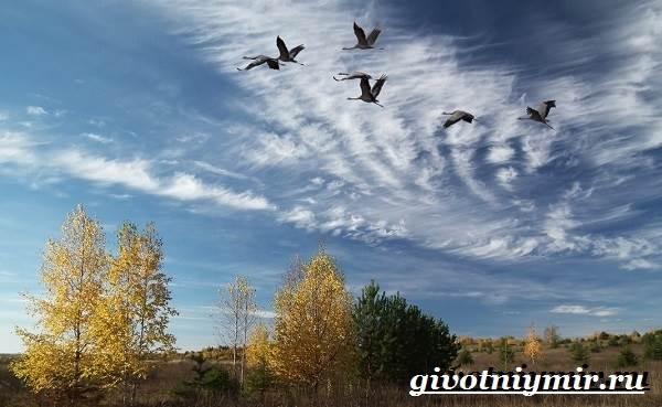 Почему-птицы-улетают-на-юг-4