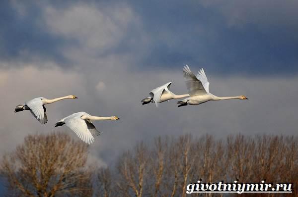 Почему-птицы-улетают-на-юг-5