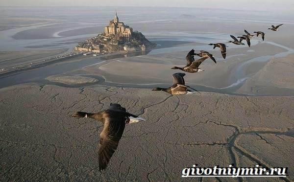 Почему-птицы-улетают-на-юг-6