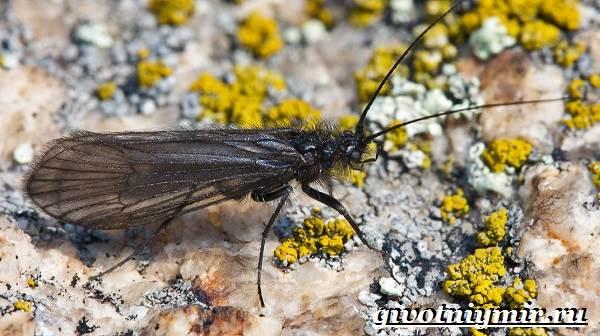 Ручейник-насекомое-Образ-жизни-и-среда-обитания-ручейника-2