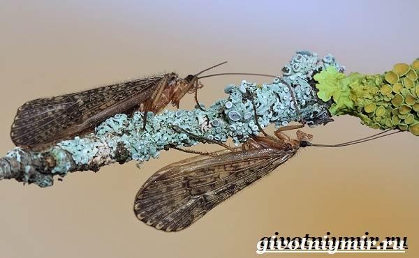 Ручейник-насекомое-Образ-жизни-и-среда-обитания-ручейника-6