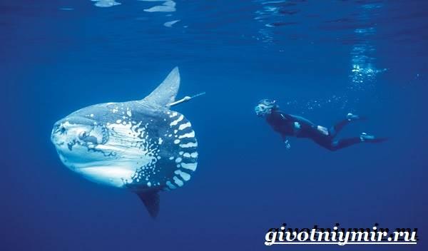 Рыба-луна-Образ-жизни-и-среда-обитания-рыбы-луны-4