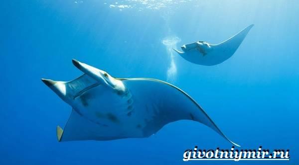 Скат-рыба-Образ-жизни-и-среда-обитания-рыбы-скат-7