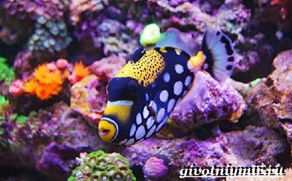 Спинорог-рыба-Образ-жизни-и-среда-обитания-спинорога-11