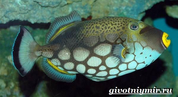 Спинорог-рыба-Образ-жизни-и-среда-обитания-спинорога-12