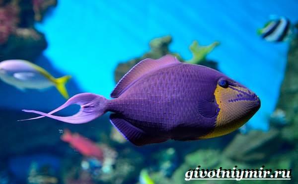 Спинорог-рыба-Образ-жизни-и-среда-обитания-спинорога-2
