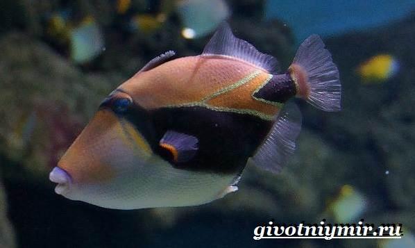 Спинорог-рыба-Образ-жизни-и-среда-обитания-спинорога-3