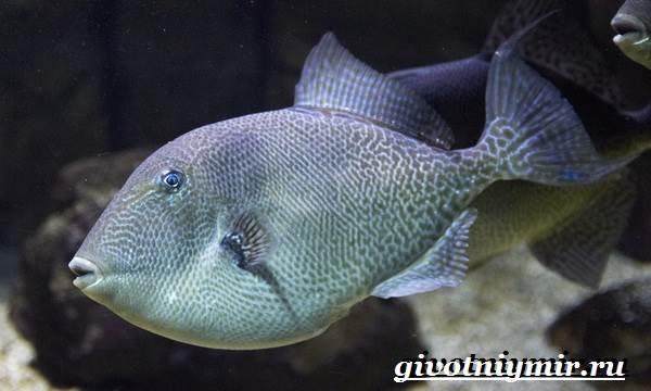 Спинорог-рыба-Образ-жизни-и-среда-обитания-спинорога-4