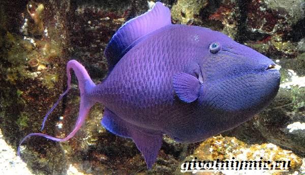 Спинорог-рыба-Образ-жизни-и-среда-обитания-спинорога-9
