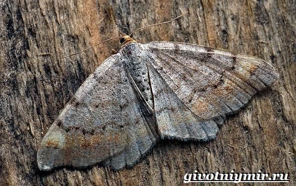 Тутовый-шелкопряд-насекомое-Образ-жизни-и-среда-обитания-тутового-шелкопряда-6