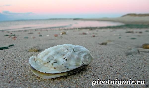 Устрица-моллюск-Образ-жизни-и-среда-обитания-устрицы-1
