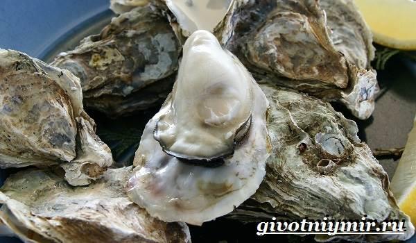 Устрица-моллюск-Образ-жизни-и-среда-обитания-устрицы-2