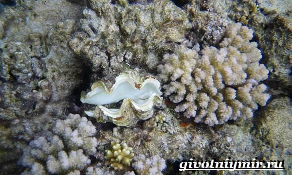 Устрица-моллюск-Образ-жизни-и-среда-обитания-устрицы-6