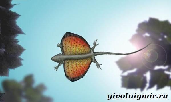Ящерица-дракон-Образ-жизни-и-среда-обитания-ящерицы-дракон-3