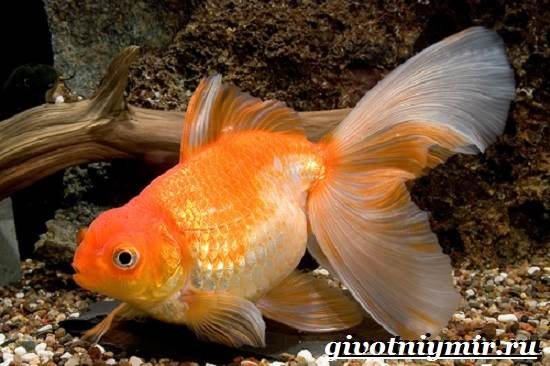 стоимость аквариумных рыбок с фото