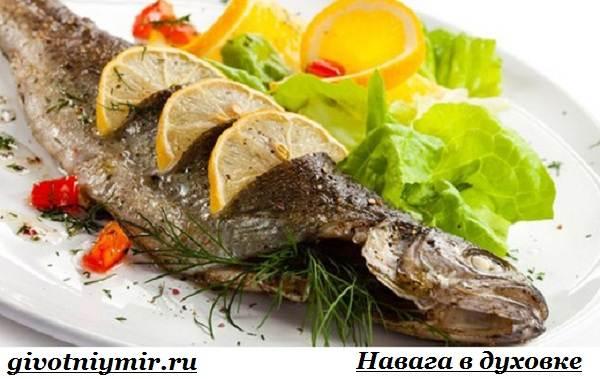 Навага-рыба-Образ-жизни-и-среда-обитания-наваги-6