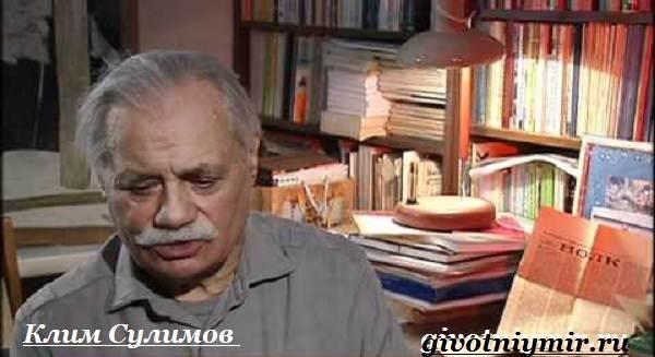 Собака-Сулимова-Описание-особенности-и-история-собаки-Сулимова-3