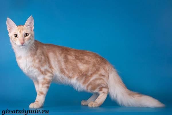 Турецкая-ангора-кошка-Описание-особенности-уход-и-цена-турецкой-ангоры-9