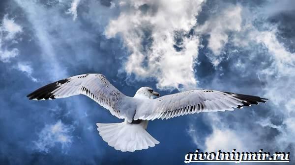Альбатрос-птица-Образ-жизни-и-среда-обитания-альбатроса-3