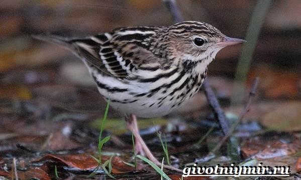 Конек-птица-Образ-жизни-и-среда-обитания-птицы-конек-7