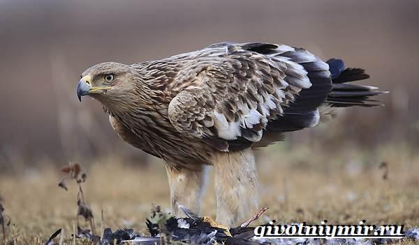 Кто такой орел могильник