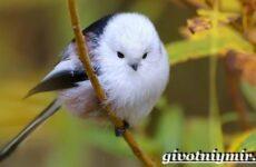 Ополовник птица. Образ жизни и среда обитания птицы ополовник