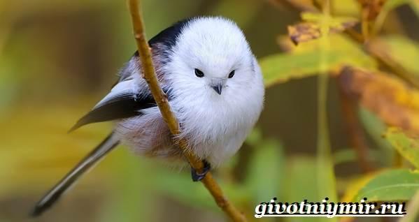 Ополовник-птица-Образ-жизни-и-среда-обитания-птицы-ополовник-1