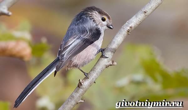 Ополовник-птица-Образ-жизни-и-среда-обитания-птицы-ополовник-3