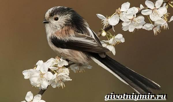 Ополовник-птица-Образ-жизни-и-среда-обитания-птицы-ополовник-4