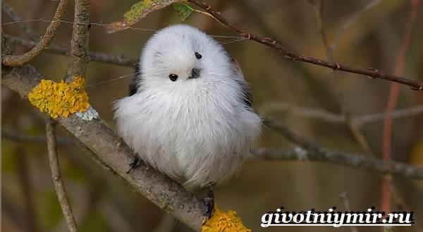 Ополовник-птица-Образ-жизни-и-среда-обитания-птицы-ополовник-5