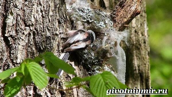 Ополовник-птица-Образ-жизни-и-среда-обитания-птицы-ополовник-6
