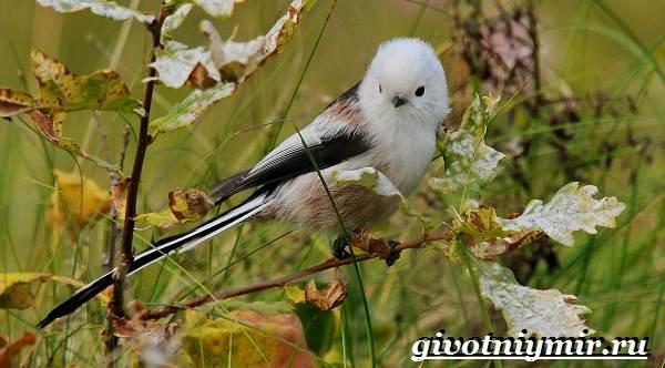 Ополовник-птица-Образ-жизни-и-среда-обитания-птицы-ополовник-7