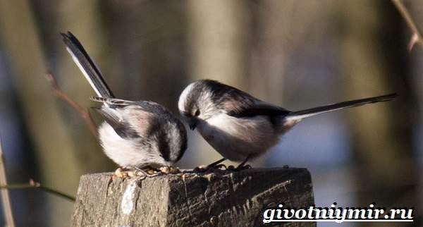 Ополовник-птица-Образ-жизни-и-среда-обитания-птицы-ополовник-8