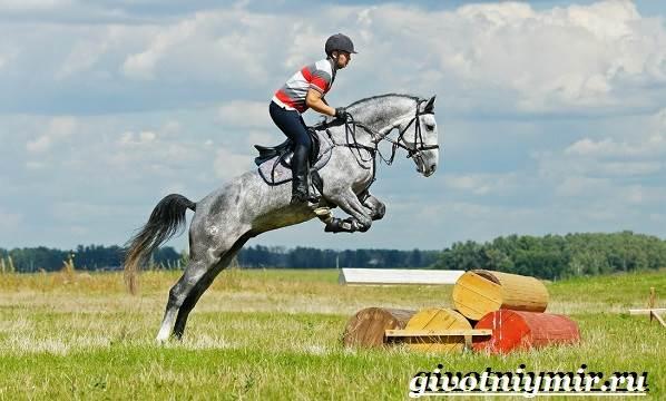 Орловская-лошадь-Описание-особенности-уход-и-цена-орловской-лошади-1
