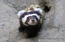 Перевязка животное. Образ жизни и среда обитания перевязки