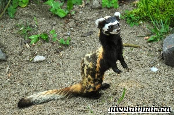 Перевязка-животное-Образ-жизни-и-среда-обитания-перевязки-5