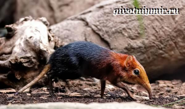 Петерса-собачка-Образ-жизни-и-среда-обитания-хоботковой-собачки-петерсы-2