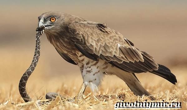 Птицы-Красной-книги-России-16
