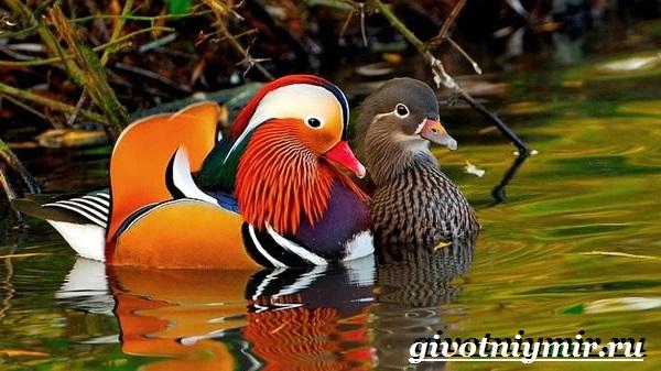 Птицы-Красной-книги-России-29