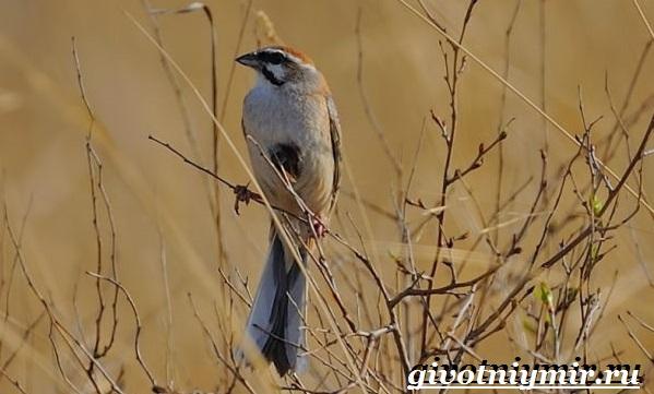 Птицы-Красной-книги-России-30