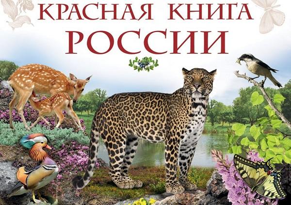 Птицы-Красной-книги-России-32