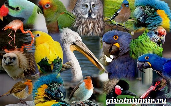 Птицы-Красной-книги-России-33